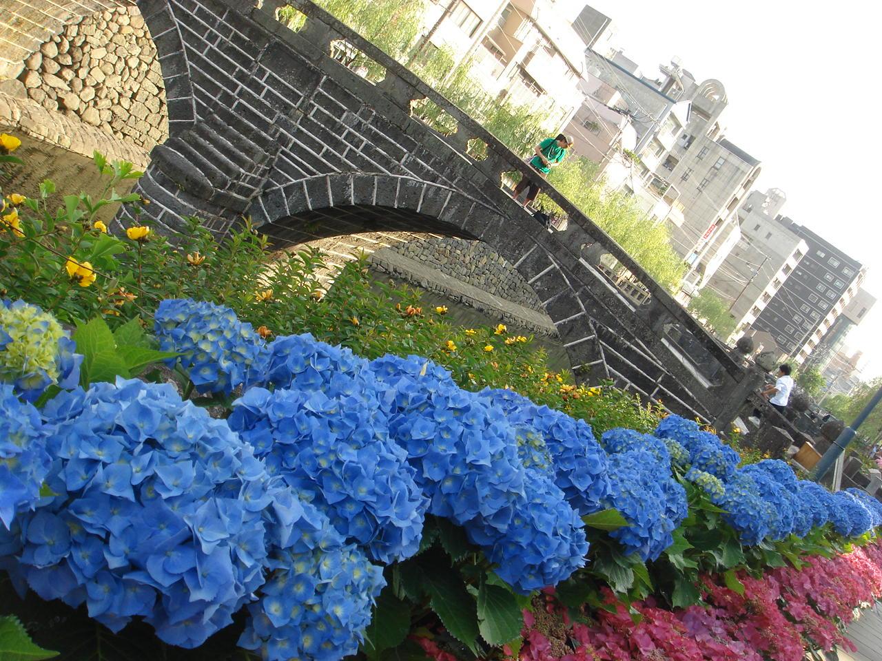 紫陽花と眼鏡橋。